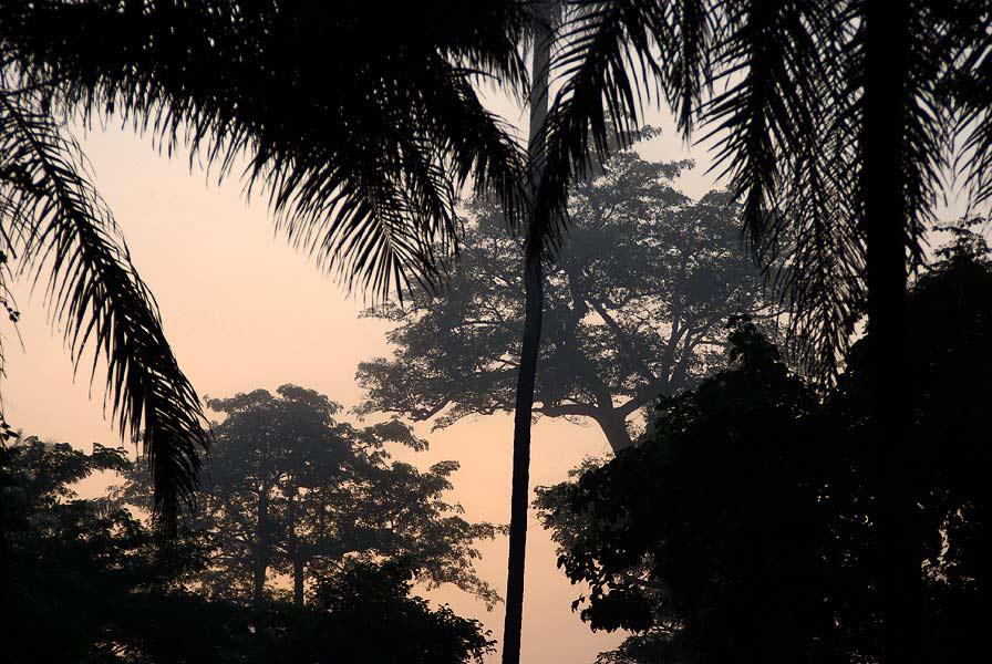 Foresta di cantanhez le foreste della guinea bissau sono for Pianta della foresta di pioppo
