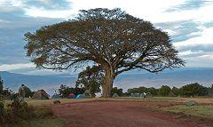 Ngorongoro: campo