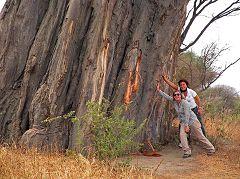 Kwa Kuchinia: baobab