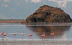 Lago Natron: fenicotteri