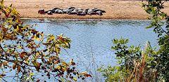 Bénoué: parco nazionale