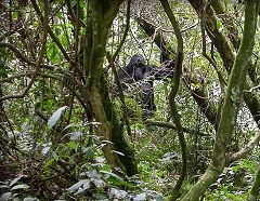 Impenetrable Forest National Park