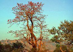 Alantika: vegetazione