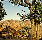 Nagueimolo: villaggio dei baobab