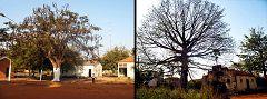 Bafatá: alberi