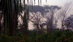 Foresta di Cantanhez