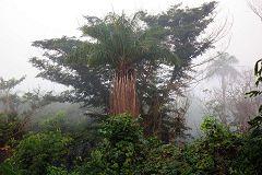 La foresta di Cantanhez