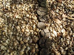Isola Orango: conchiglie
