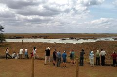Manyara: hippo pool