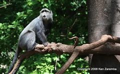 Monkey at Lake Manyara