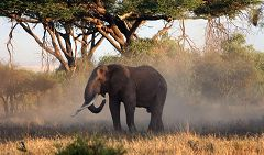 Elephant at Mudanda Rock (Tsavo East)