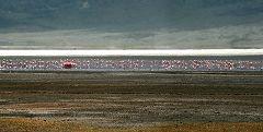 Ngorongoro: fenicotteri