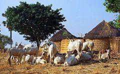 Villaggio Koma