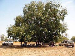 Picnik sotto l'albero