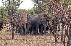 Serengeti: elefanti