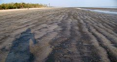 Sundarbans: Kotka beach