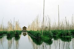 Floating Gardens (Inle Lake)