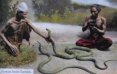 Incantatori di serpenti (Snake Charmers)