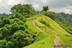 Campuhan Ridge Walk (Bali)