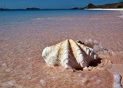 Pulau Padar: conchiglie