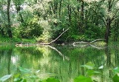 Palude di Brivio: martin pescatore