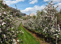 Castelbello-Ciardes (Kastelbell-Tschars)
