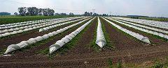 Commessaggio: coltivazioni