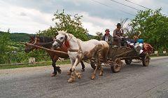 Valea Ciungii: trasporti locali
