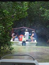 Il tunnel delle Mangrovie