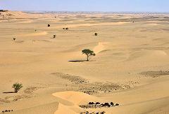 Wadi el Milk