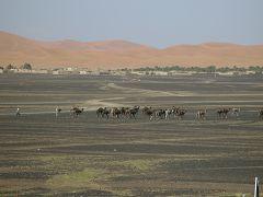 Merzouga: cammelli