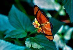 Vienna: serra delle farfalle