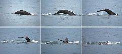 Húsavik: in cerca di balene