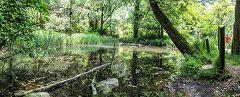 Agliate: area umida nel parco Rovella