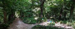 Pomelasca: bosco della Bressanella