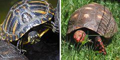 Cupulatta: parco delle tartarughe