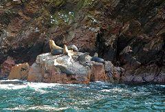 Isole Ballestas: foche