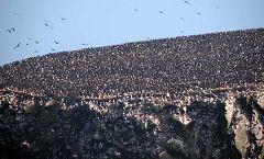 Isole Ballestas: uccelli