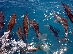 Baia dos Golfinhos (baia dei delfini)