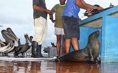 Mercato del Pesce (Puerto Ayora)