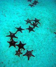 Seymour-Mosquera: stelle marine