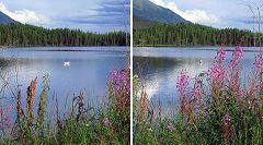 Koidern (Alaska Hwy 1)