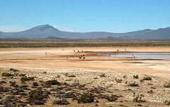 Pampa Cañahuas: vicuñas con vista sul vulcano Chachani