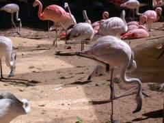 Parque das aves (Parco degli uccelli)