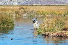 Titicaca: isole degli Uros