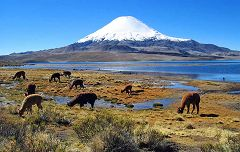 Parinacota: vista sul vulcano